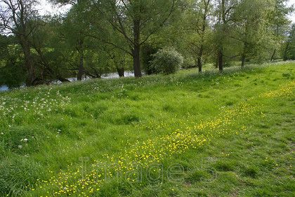 butterline 