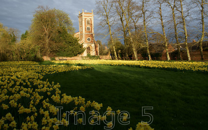 daffswillen1 