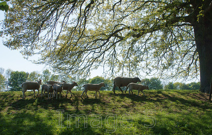 homeward 