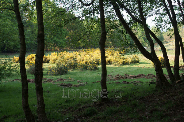 gorseframe1 
