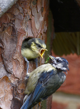 eatyourgreens 
