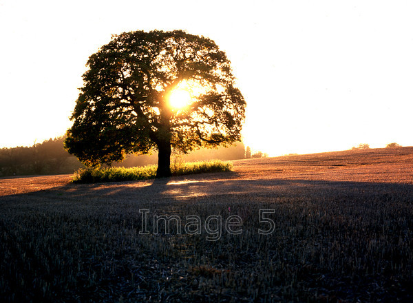 oakbacklit 