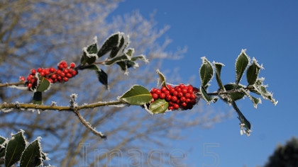 berryrimeblue1 