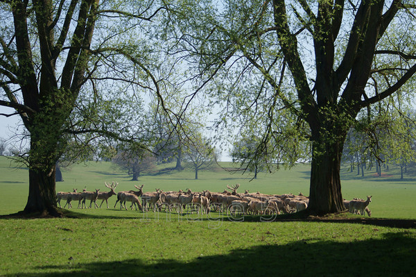 deertrek2 