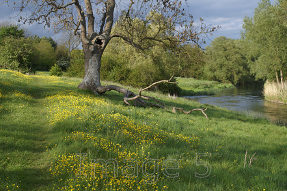 treeriver 
