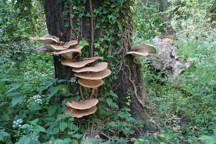steps2 