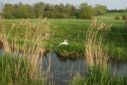 centrewhite 