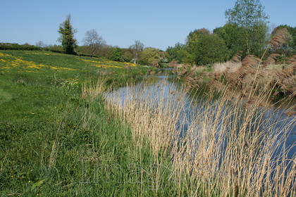 reedview 