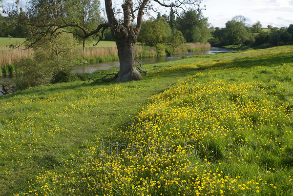 butterview 