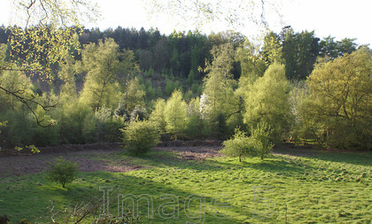 springscene 