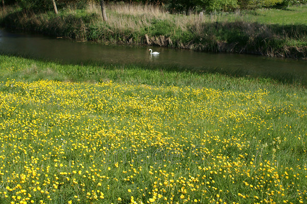 1white2 