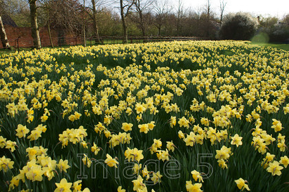 yellowlake 