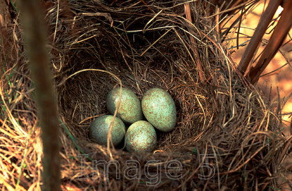 4eggnest 