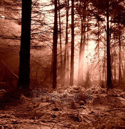 winterlight selenium 