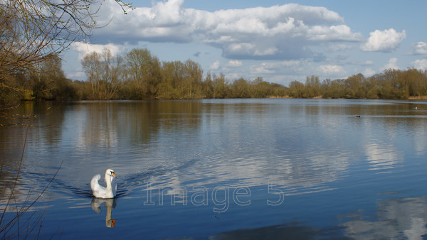 blueripple 