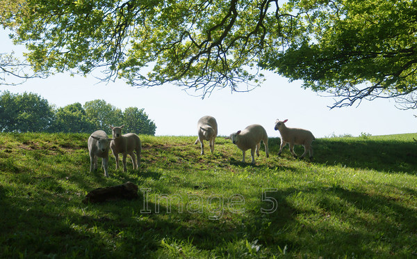 highjinx 
