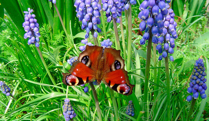 butt5 