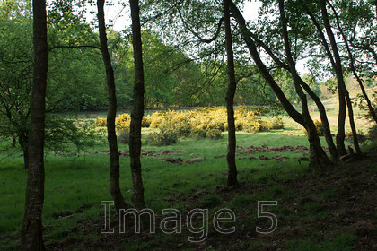 gorseframe2 