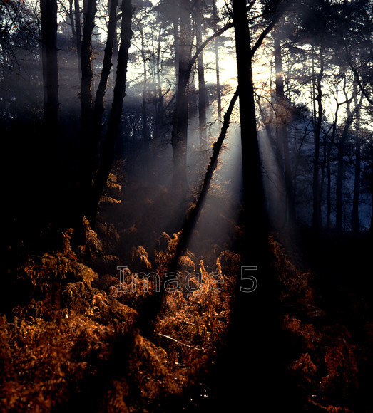 Spirit 