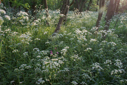 driftwhite2 
