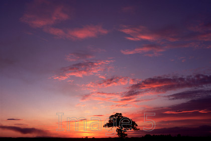 sky&treemk 