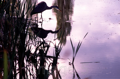 heronmk 