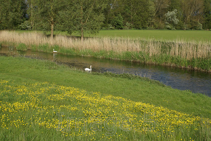 swantwin 