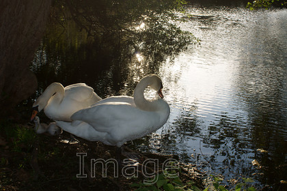 dappledown2 