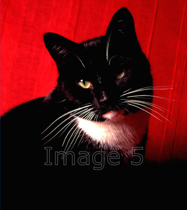 farthing 