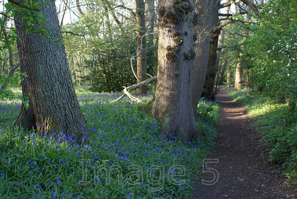 bbpath 