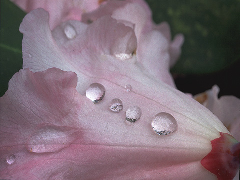 raindrops on bloom